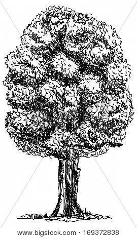 vector -big  tree isolated on background
