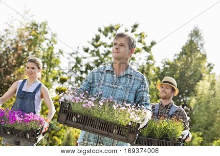 Gardeners looking away while carrying crates with flower pots at garden