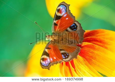 Butterfly on a flower. Close up view