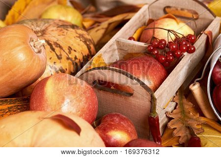 autumn background, fruits and vegetables on yellow fallen leaves, apples and pumpkin, decoration in country style, dark brown toned