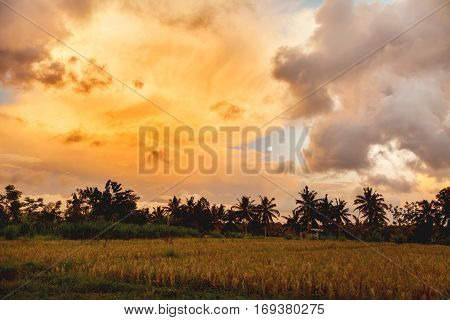 Rise fields on Bali island. Sunset with Moon and differently shaped clouds. Indonesia.