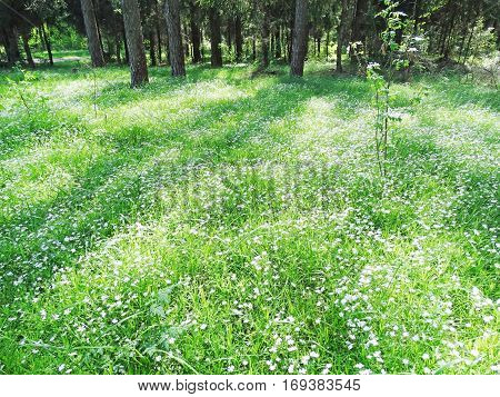 view of a spring forest on a sunny day with field of flowers