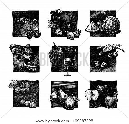 Vector ink hand drawn set of berries and fruits. illustration of mulberry strawberries watermelon black-currant vine raspberry gooseberry pear and apple.