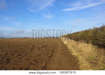 Plow Soil And Winter Hedgerow