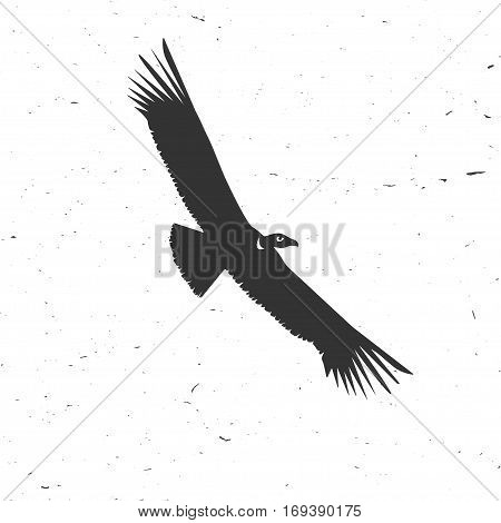 Flying condor silhouette on the white background. Vector illustration. Concept for shirt, print, seal, overlay or stamp.