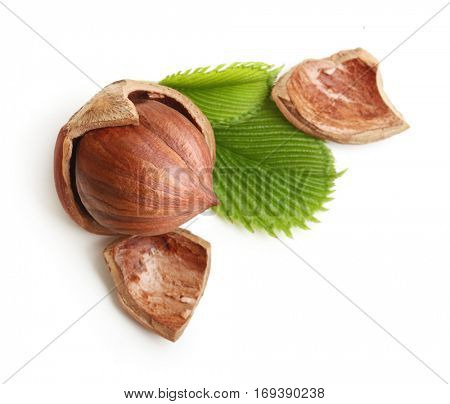 Forest nuts hazelnuts isolated