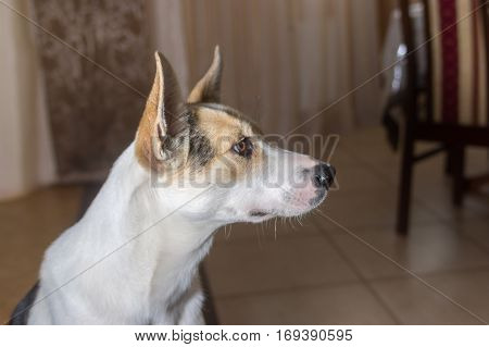 Indoor portrait of adorable mixed breed young dog