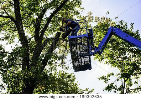 man standing on aerial platform cutting tree with chain saw