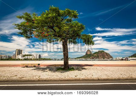 Lonely Tree in Botafogo Beach, Sugarloaf Mountain in the Horizon, and Deep Blue Sky With Clouds in Rio de Janeiro, Brazil