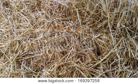 thatch roof or dry grass background, brown dry grass