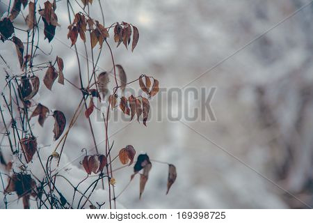 Close up dry leaves in winter with blur background