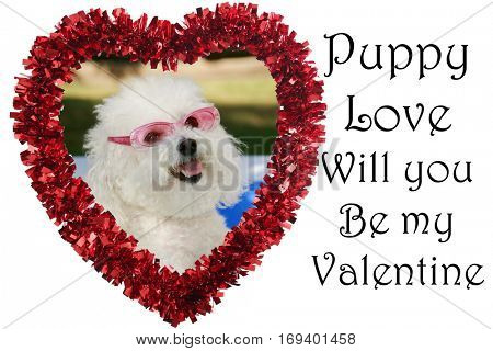 Cute Valentines Day Heart with a Bichon Frise Dog inside. Isolated on white with text, text ready PUPPY LOVE WILL YOU BE MY VALENTINE. Text and Photo are easily replaced.