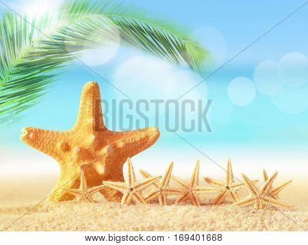 Family starfish on a sandy beach near the sea