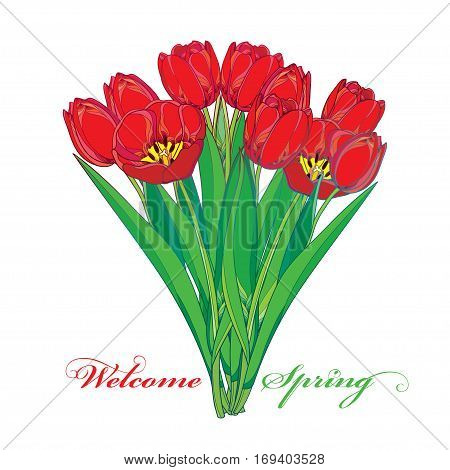 Vector bouquet with outline red tulips flowers and green leaves isolated on white. Ornate floral elements for spring design, greeting, invitation. Welcome spring with bunch of tulip in contour style.