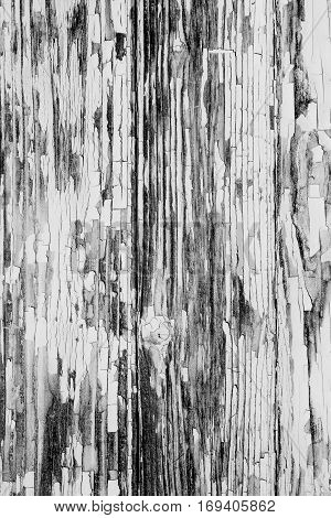 Wooden boards covered with peeling paint. Rough texture. BW photo. Background