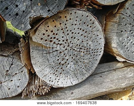 Insect hotel in an old tree trunk in the forest