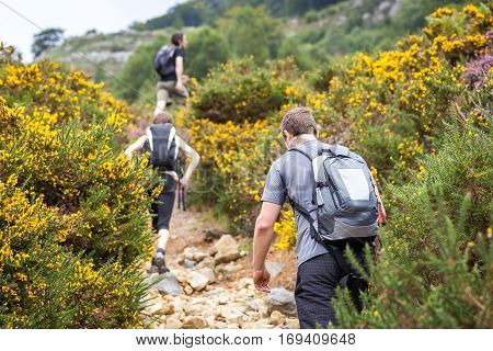 Tourists walk in mountain, sportspeople in group on trek, tourists in nature on a walk