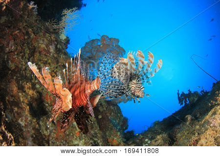 Lionfish on coral reef