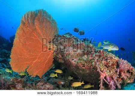 Coral reef and fish underwater in ocean
