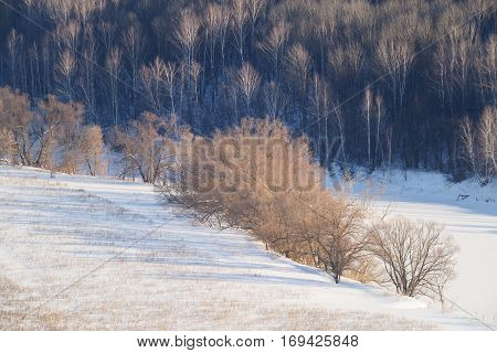Russian winter: aspen forest iced river and field in snow in sunny day landscape