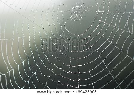 Spider web with dew drops at dawn