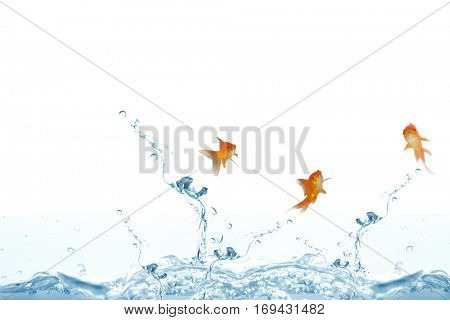 Goldfish swimming with mouth open against white screen against close up on blue sparkling water