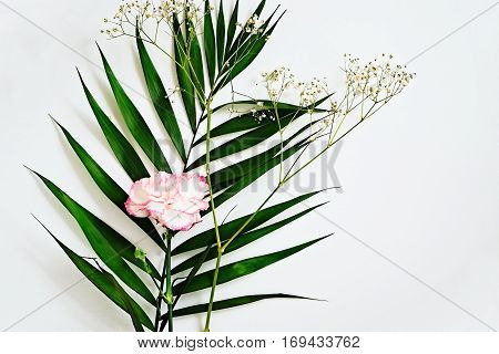 Deep green leaves and carnation flower with pink edges on a white background. Beauty blogger and social media flat lay. Copy space