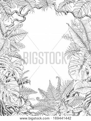 Hand drawn branches and leaves of tropical plants. Monochrome rectangle vertical l floral frame. Monstera ficus fern liana palm fronds sketch. Black and white illustration coloring page for adult.