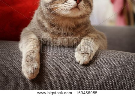 Cute cat paws on couch