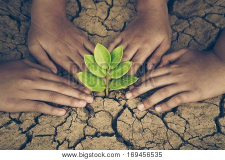 Hands of young people looking after a young green plant growing on dry cracked ground. Protect nature