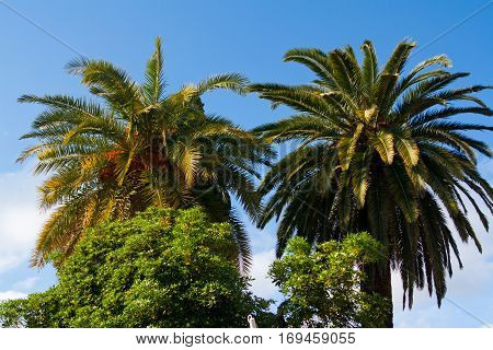 Palm trees in Nice. Cote d'Azur. Mediterranean resort. France.