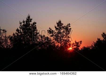 sunset through the silhouettes of trees, mysterious forest