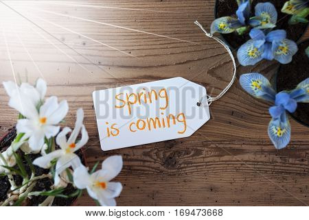 Sunny Label With English Text Spring Is Coming. Spring Flowers Like Grape Hyacinth And Crocus. Aged Wooden Background