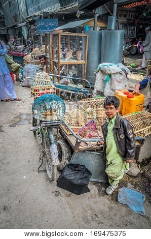 Boy With Cages In Afghanistan