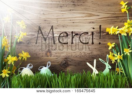 Wooden Background With French Text Merci Means Thank You. Easter Decoration Like Easter Eggs And Easter Bunny. Sunny Yellow Spring Flower Narcisssus With Gras. Card For Seasons Greetings