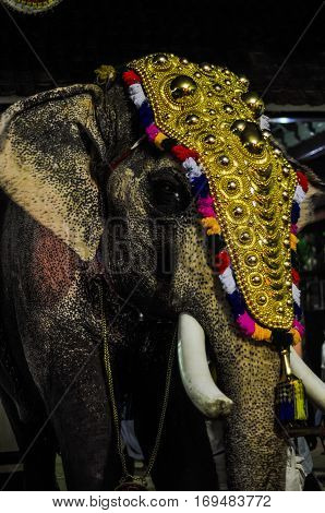 Elephant With Decoration In Kerala