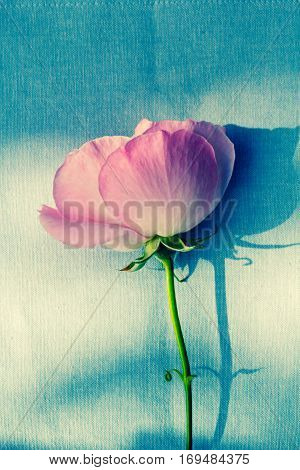 Romantic pink roses on fabric green background