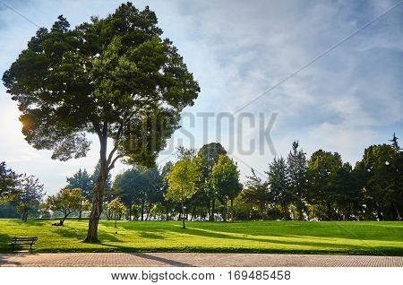 Beautiful Huge Tree In The Simon Bolivar Park