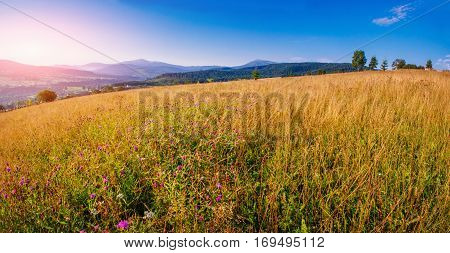 high yellow grass field in the mountains