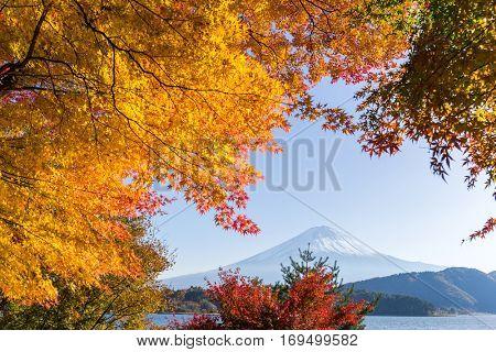 Mt. Fuji in autumn season