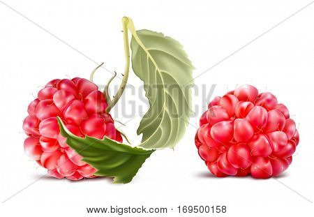 Raspberry and raspberry with leaf. Fully editable handmade mesh. Vector illustration of berries.