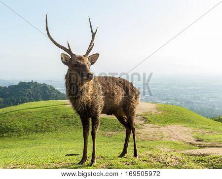 Male Deer in the park
