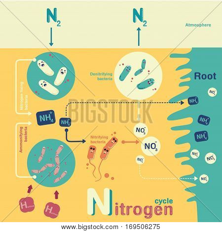 Microorganism life info-graphic illustration vector cartoon character