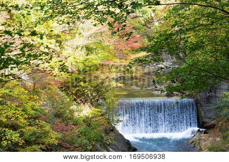 Autumn forest and waterfall