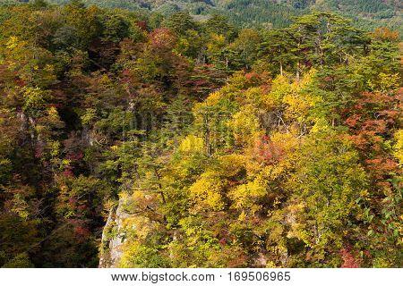 Autumn Naruko canyon