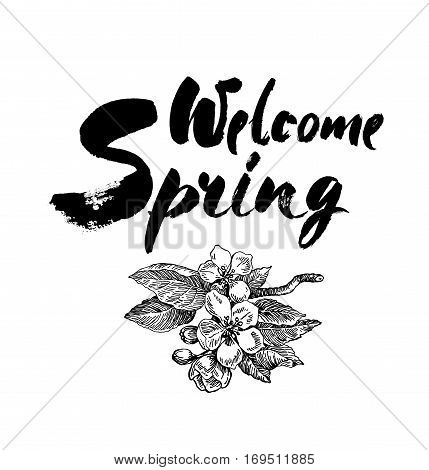 Welcome spring vector lettering on blossoming apple tree branch Hand drawn phrase. Handwritten modern brush calligraphy for invitation and greeting card t-shirt prints and posters. Elements for your design. White background.