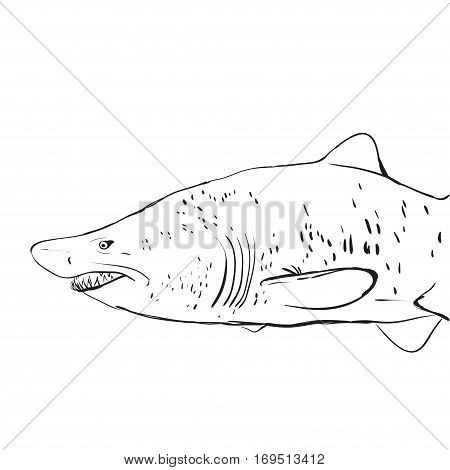 Great White Shark Underwater. Sketch. Black contour on a white background. vector