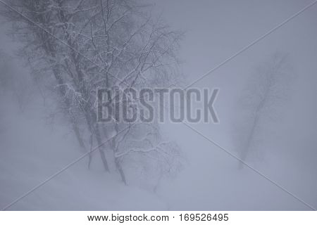Snowy forest in the clouds on North slope Aibga Ridge of Western Caucasus