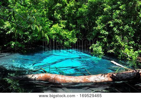 Very clear water at Emerald Pool in Krabi, Thailand