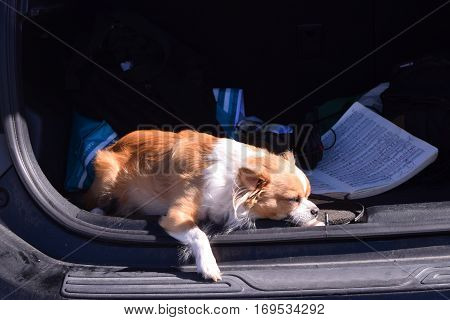a small dog sleeps in the sun in the back of a car